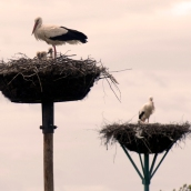 Cada uno en su nido