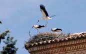 Ejercicios de fortalecimiento de las alas buscando la emancipación.