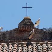 En 2004 se censaron 32.000 parejas de cigüeñas en España, pero ahora se estima una población de más de 50.000 parejas
