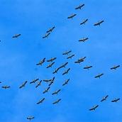 A finales de octubre ya vuelan las cigüeñas (las que no se han ido) por los cielos de Madrid. Estas proceden de Centroeuropa