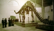 Reptiles II. La reina Victoria Eugenia visita el dinosaurio Carnegie una vez instalado en el Museo Nacional de Ciencias de Madrid, en 1913. Cabrera es el primero por la izquierda.