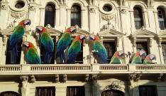 Aves invasoras. Provenientes del Amazonas, las papagayas se han instalado en la Península Ibérica, incluso en el Parlamento donde cotorrean sin tregua.