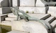 Reptiles I. Iguana