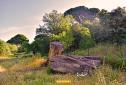 Tronco caído de pino centenario en la cuenca media del Guadarrama