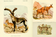 Láminas científicas pintadas por Cabrera