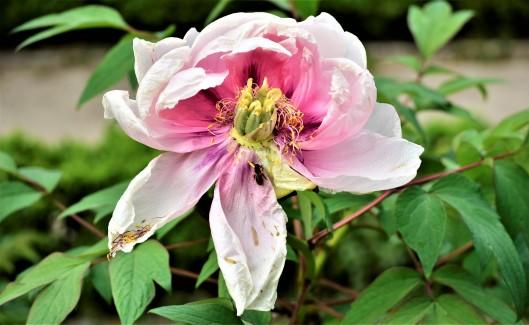 Flores del 2 de mayo